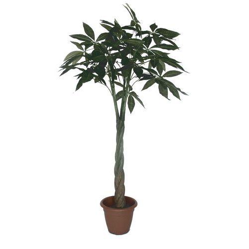 Arália, műnövény, 130 cm