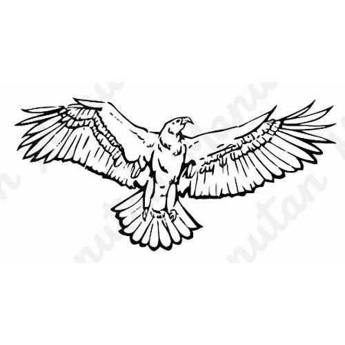 Információs tábla - Ragadozó madár körvonala